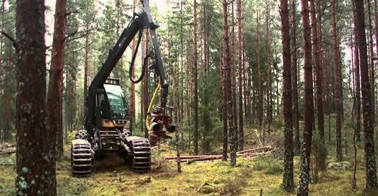 Meža tehnika